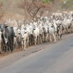 Irate Youths Chase Out Herdsmen From Ondo Community