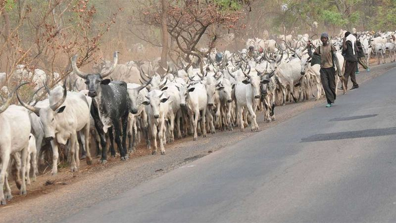 Youths Chase Out Herdsmen Planning To Settle In Ondo Community