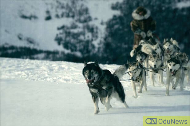 The dog-sled team