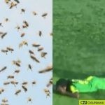 Bees Invade Football Pitch, Sting Players, Officials During Match
