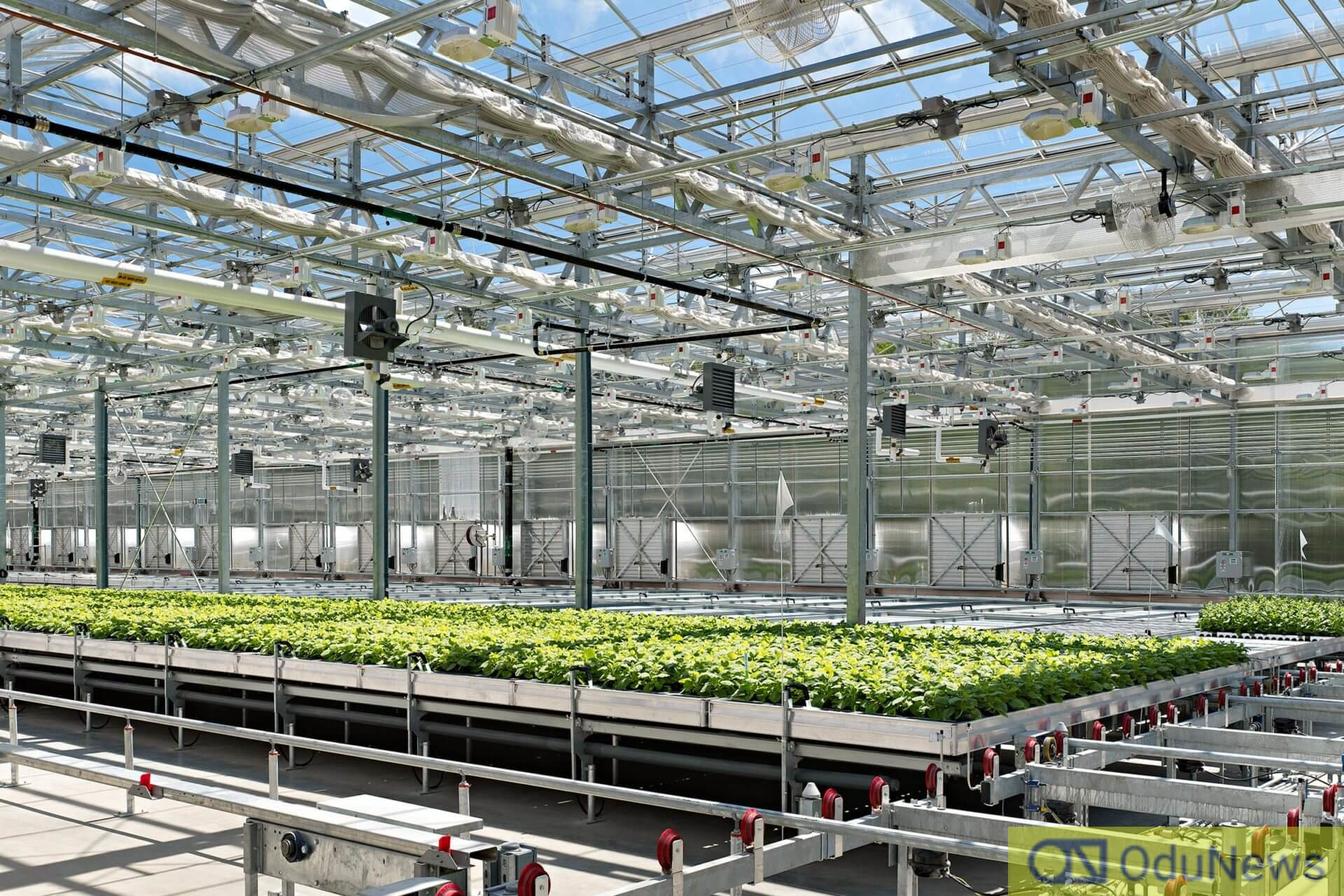 The company, known as Medicago, says it achieved the breakthrough through the use of plants