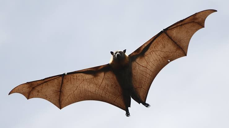 Coronavirus Came From Bats Not A Lab - WHO