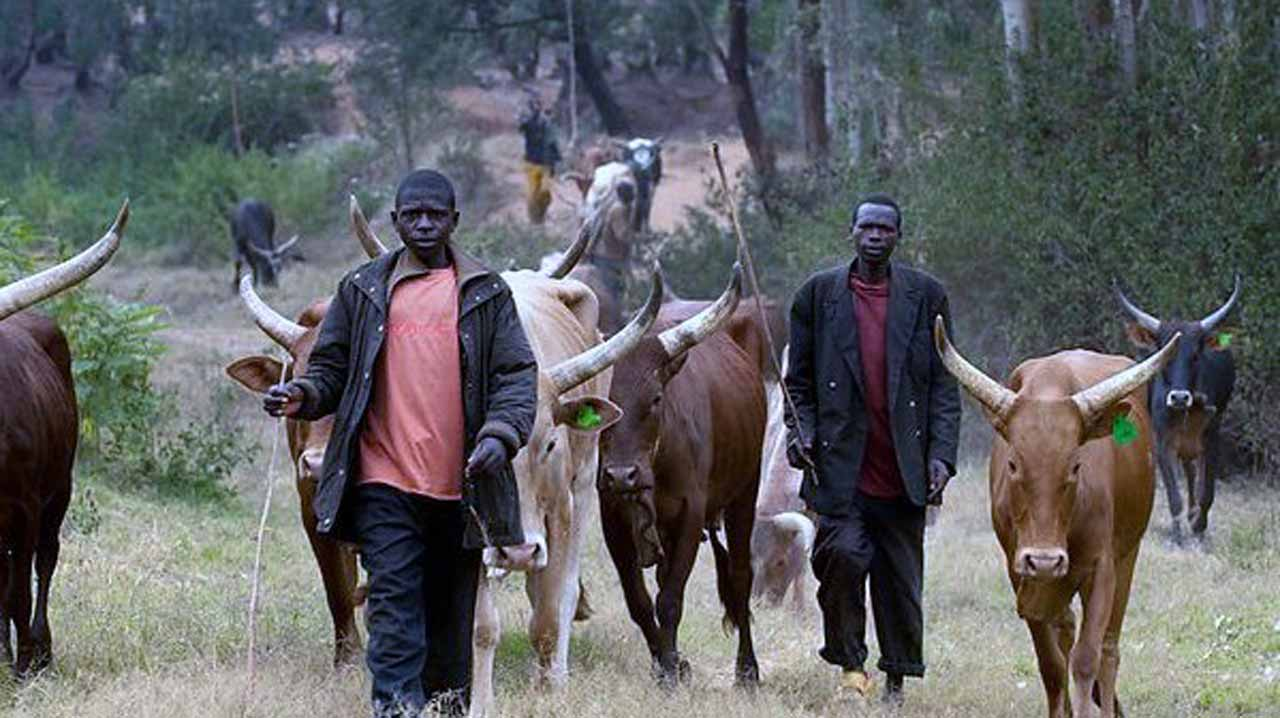 Fulani herdsmen have been responsible for a lot of killings in many places across the nation