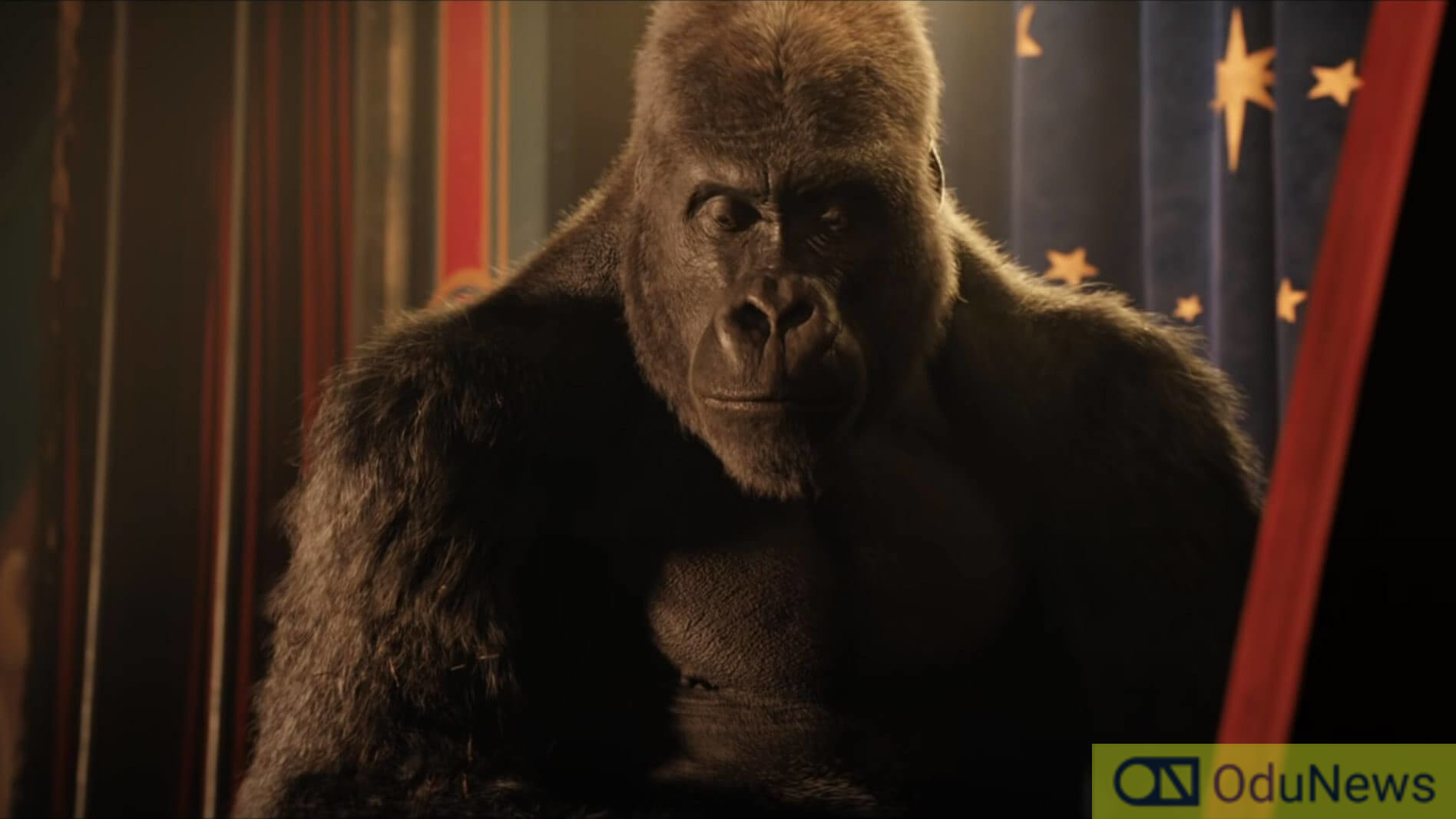 The Silverback gorilla known as Ivan (voiced by Sam Rockwell)
