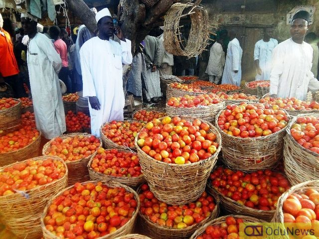 Northern Tomato Farmers, Traders Lose Over N10bn in One Week, Cry Out For Help